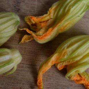 garden zucchini 014
