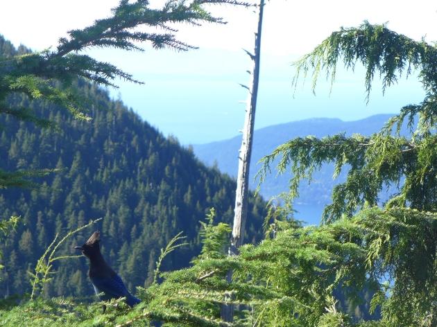 cypress fall 2015 017