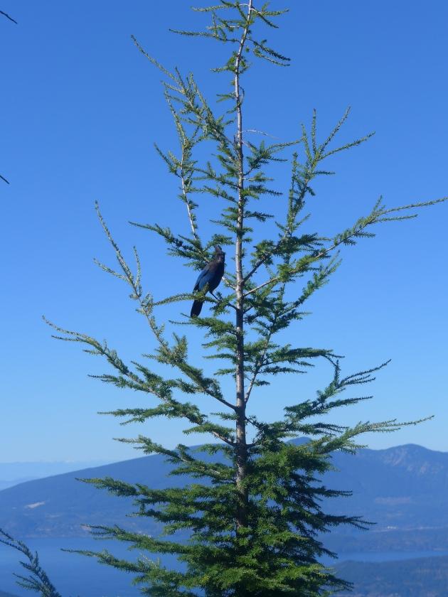cypress fall 2015 022