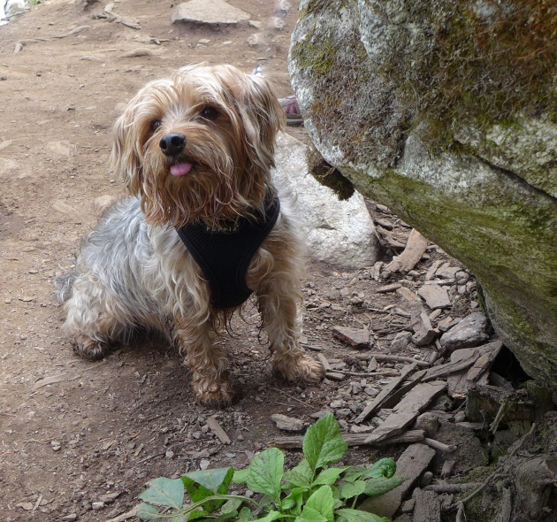 dog friendly hikes